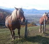 chevaux de Revolat
