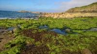 La plage verte de St Cast
