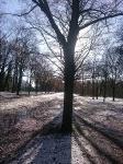 soleil d'hiver à Vincennes